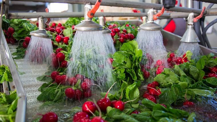 L'arte di coltivare i ravanelli: la qualità dalla terra alla tavola