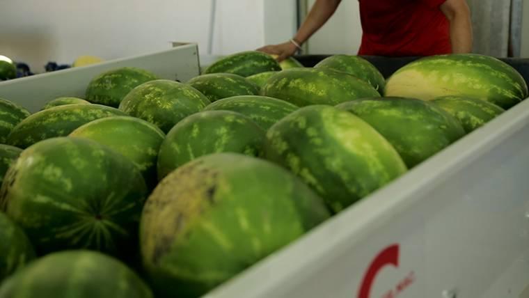 Valori nutrizionali dell'anguria: il cocomero e la salute