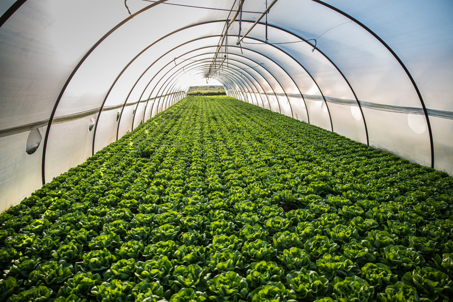 Principi fondamentali dell'agricoltura biologica