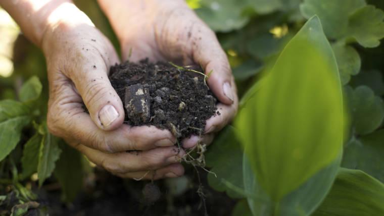 Prodotti biologici, I reali motivi per sceglierli