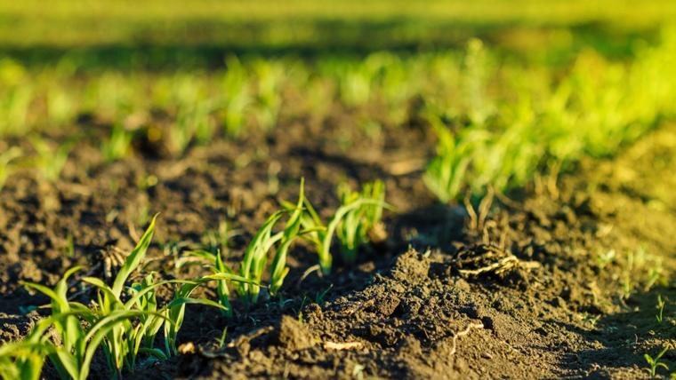 Agricoltura biologica, la posizione del governo Europeo