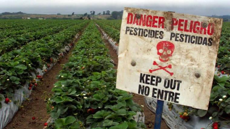 Esposizione ai pesticidi, quali sono i rischi e come evitarla