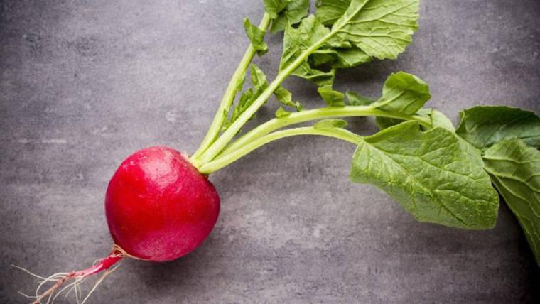 Usi del ravanello in cucina, sfruttiamo al meglio questo prezioso ortaggio