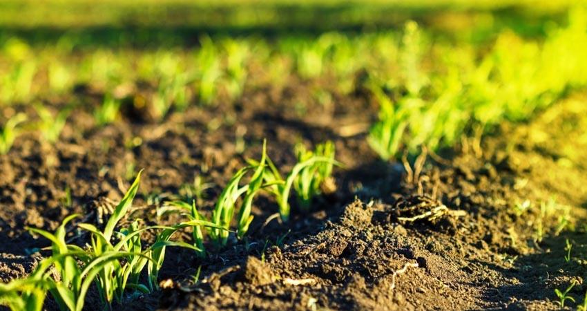 Agri Italia rinnova il suo comparto macchine. Installata una nuova accatastatrice di prodotti agricoli