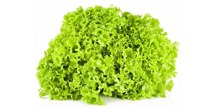 Insalata Lollo Verde, qualche veloce e salutare ricetta per valorizzarla al meglio