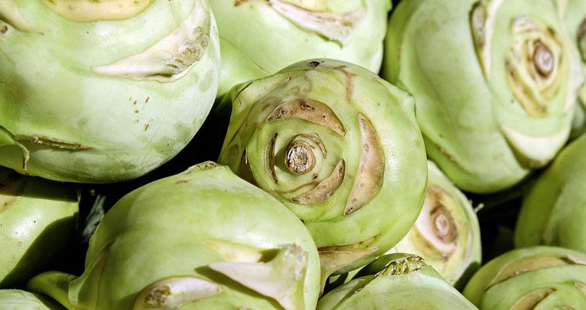Produzione e vendita di Cavolo Rapa: un'eccellenza dell'Agro Pontino.
