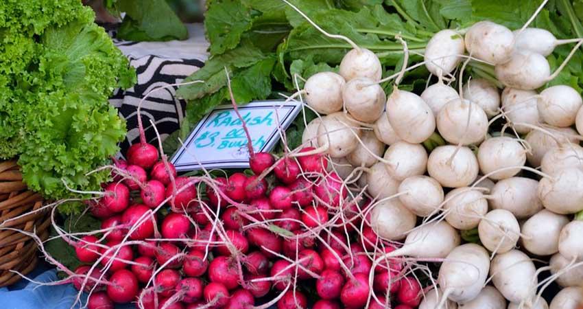 Scopriamo le diverse varietà di ravanelli, le loro caratteristiche e l'utilizzo in cucina