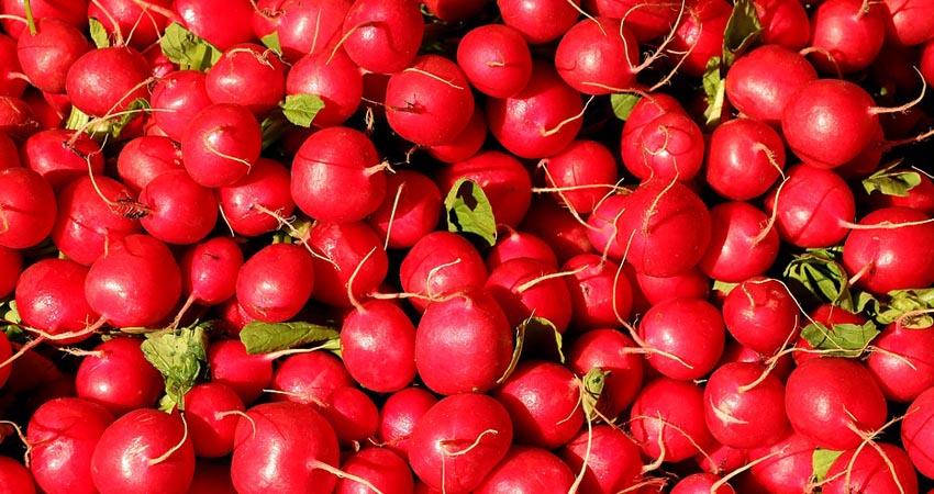 Calorie dei ravanelli e proprietà dietetiche. Perfetti per perdere peso e depurarsi
