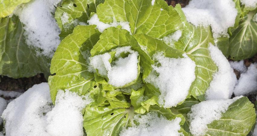 Le coltivazioni invernali di Agritalia