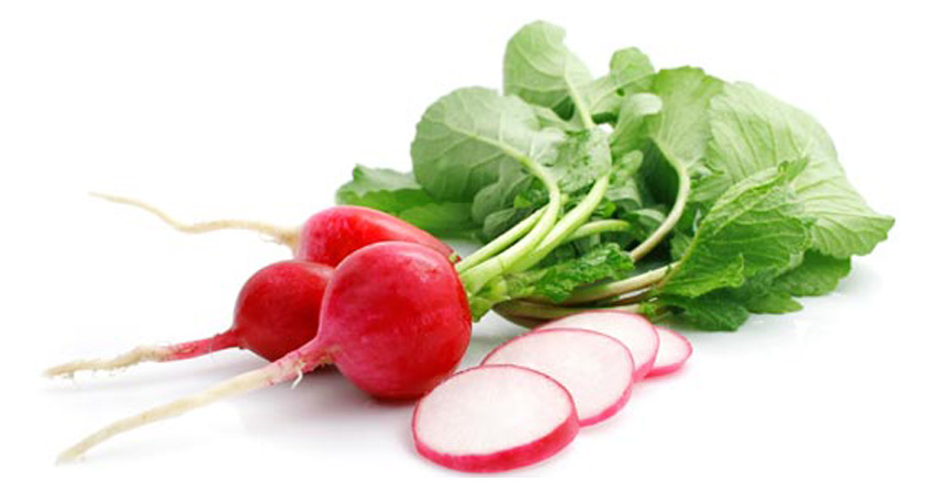bunch fresh radish with cut