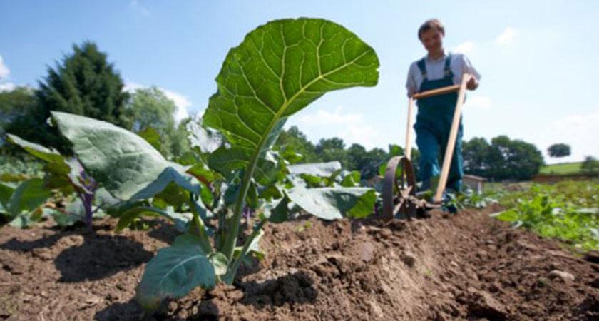 Agricoltura Biodinamica, cosa c'è di vero nelle metodologie di coltivazione olistiche