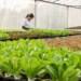 Esportazione di frutta e verdura certificata IFS, GLOBAL G.A.P. e GRASP