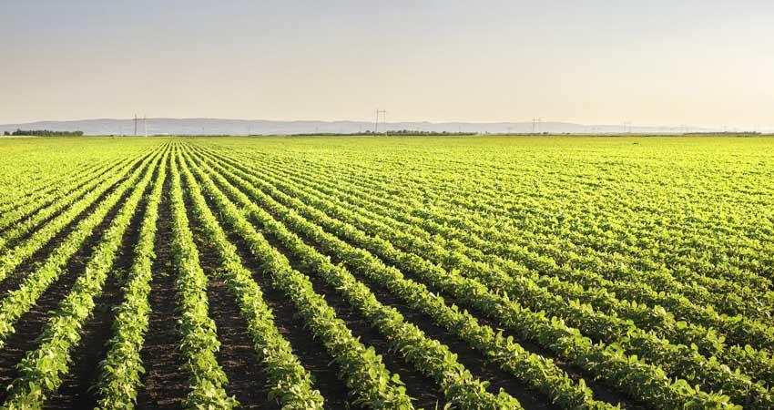 Agricoltura sostenibile, Il futuro per le nostre aziende ed il nostro territorio
