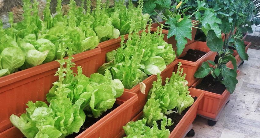 come-fare-un-orto-in-casa-materiale-attrezzi-piante-da copia