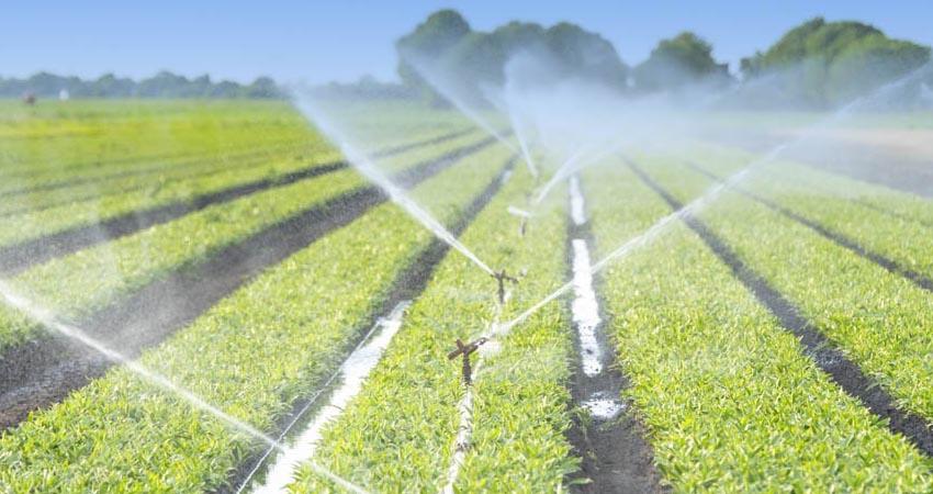 Scopriamo le diverse tipologie di irrigazione del terreno agricolo