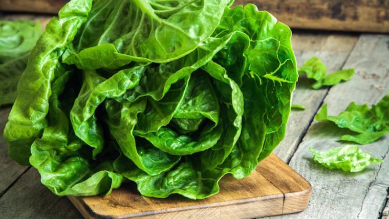 Lattuga Trocadero, dalla semina alla vostra tavola