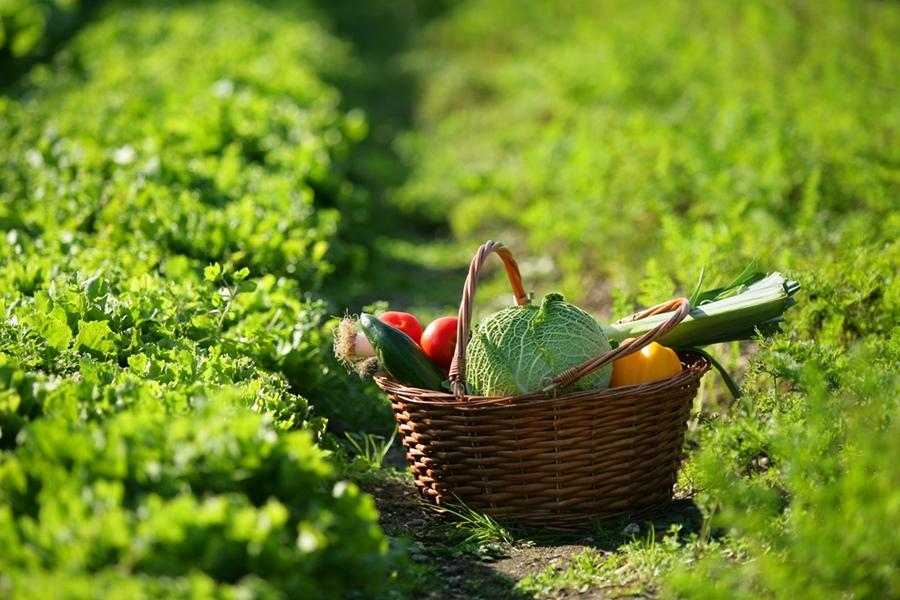 La vendita diretta dei prodotti agricoli, conviene davvero?