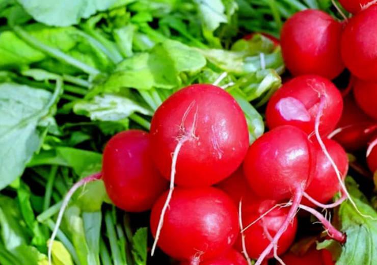 Ravanelli, rapanelli o ramolaccio, vediamone le proprietà nutrizionali