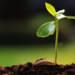 Stanchezza del terreno, vediamo come combattere il deterioramento agricolo del territorio