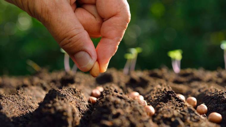 Produzione integrata di ortaggi per la grande distribuzione, il modello Agritalia