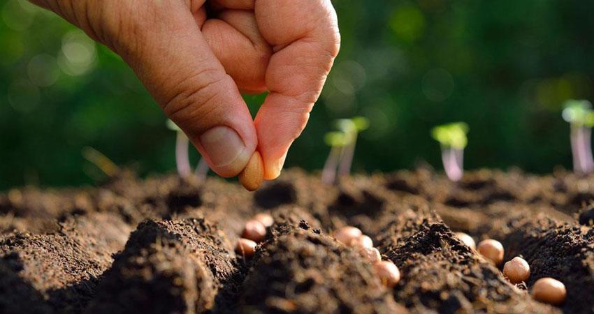 coltivazione integrata nelle pianure dell'agro pontino