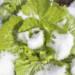 Ortaggi invernali, cosa piantare con l'arrivo del freddo