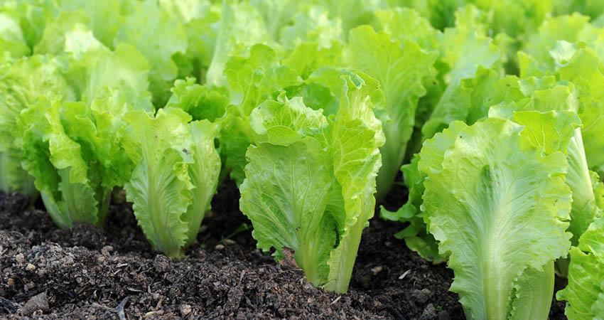 Produzione agricola nazionale: Agritalia tra i massimi produttori italiani