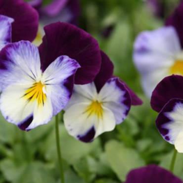 Antiparassitari naturali per proteggere le piante senza fare uso di fitofarmaci