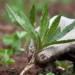 Eliminare le erbacce dal terreno senza l'impiego di erbicidi, è possibile?