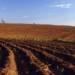 Tecniche di Fertilizzazione del terreno