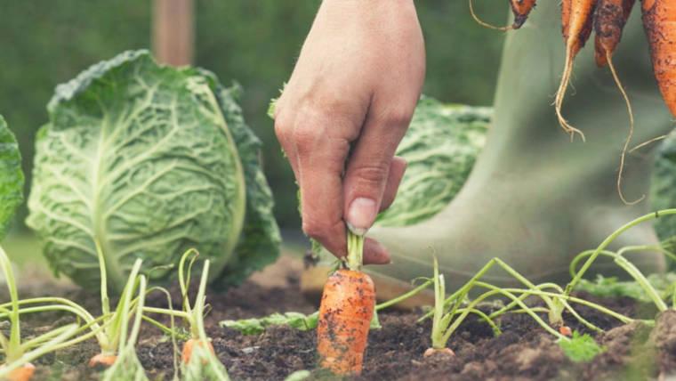 Agricoltura naturale, è possibile coltivare senza far nulla?