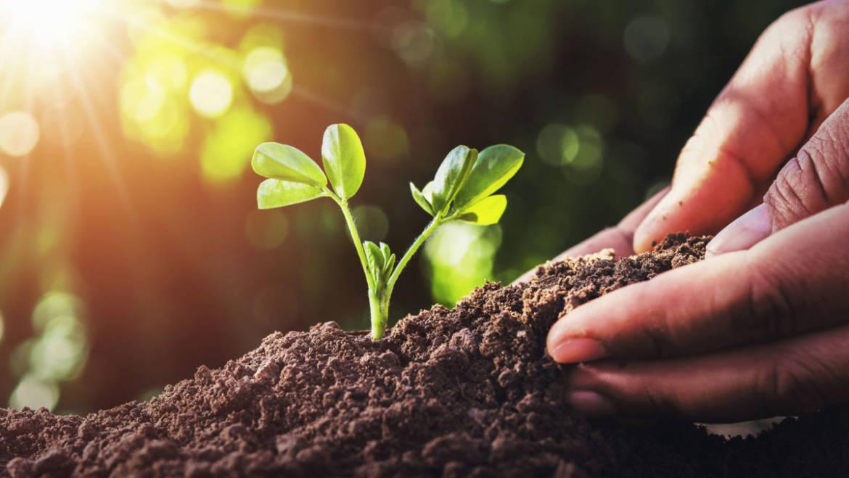 Produzione di cavolo rapa tramite l'agricoltura sostenibile