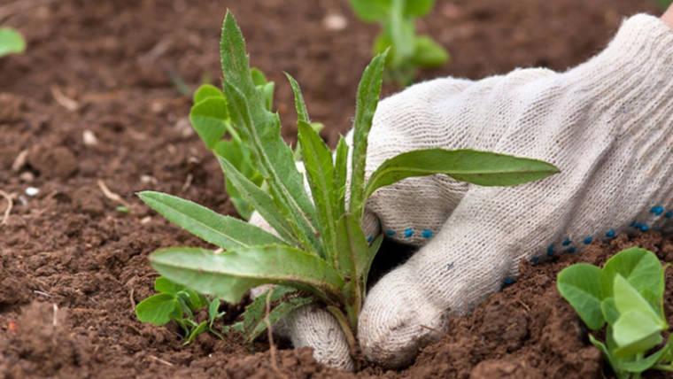 Trattare le erbe infestanti e prevenirle, la metodologia Agri Italia