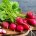 Le proprietà fitoterapiche del ravanello rosso