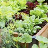 Qualche consiglio per coltivare senza utilizzare diserbanti