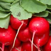 Agritalia Coop è tra i maggiori fornitore di prodotti agricoli