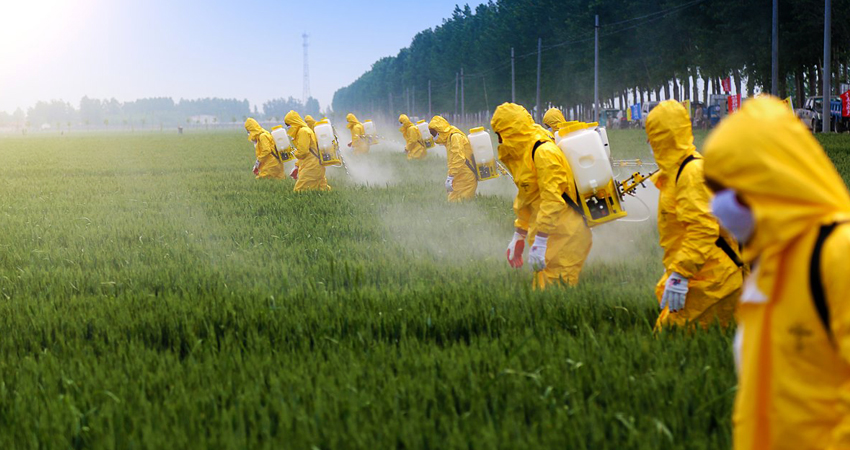 Residui di pesticidi nelle colture: rischi per l'ambiente e per la salute