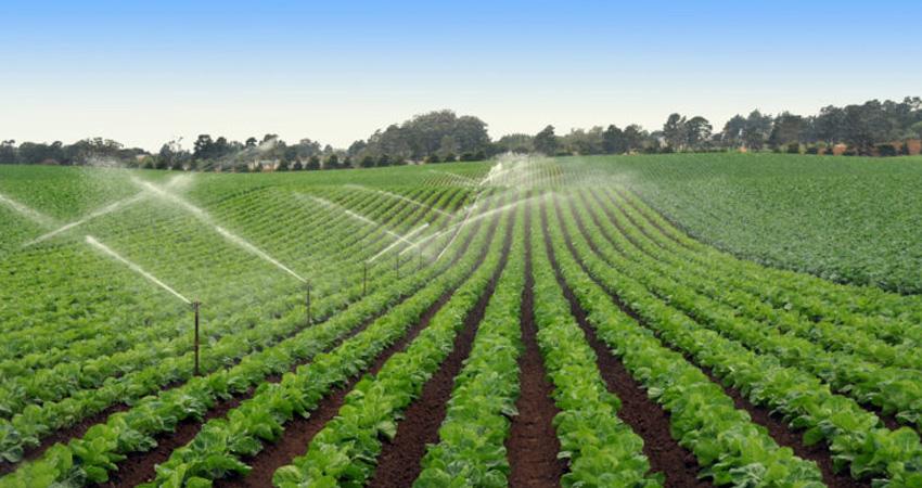 Le aflatossine in agricoltura, cosa sono e quali sono i rischi
