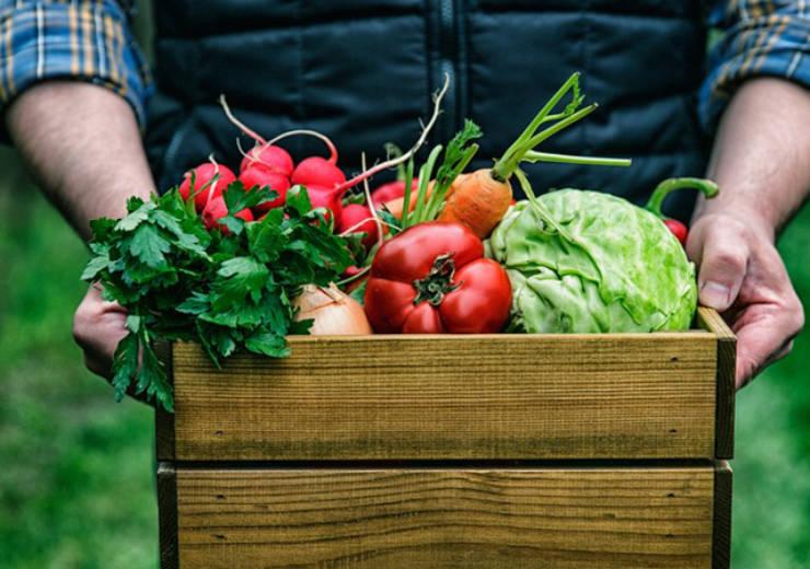 Forniture di prodotti ortofrutticoli da agricoltura biologica