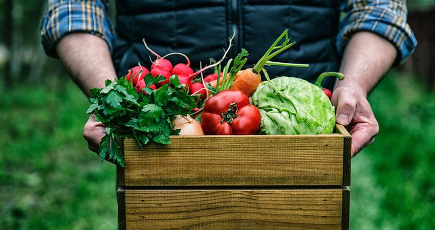 niente residui di pesticidi con l'agricoltura biologica
