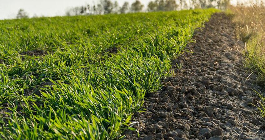 Produzioni ortofrutticole invernali, alcuni consigli utili per una coltivazione abbondante