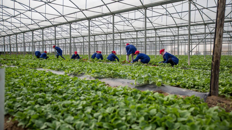 Coltivazioni sostenibili nel rispetto dell'ambiente e del terreno