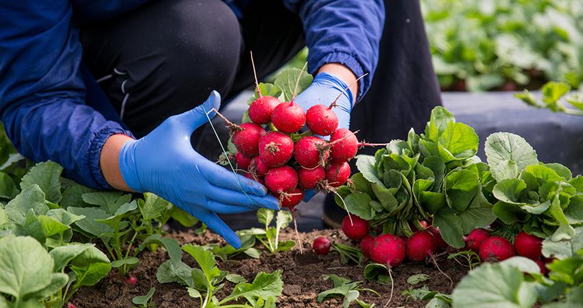 coltivazioni sostenibili