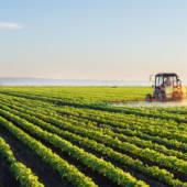 Cosa significa realmente il termine: Coltivazioni Sostenibili