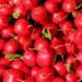 Produzione di ravanelli ad impatto zero