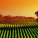 Forniture agricole all'ingrosso, le certificazioni Agritalia