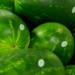 Vendita di angurie all'ingrosso solo da Agritalia
